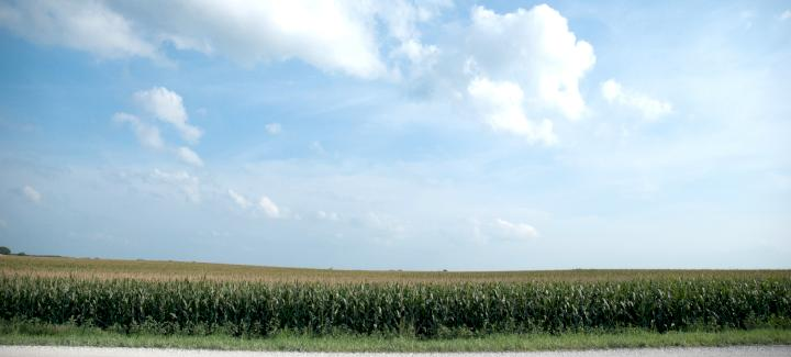 Stine® Conventional Corn Offers Yield Plus Savings